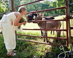 041-Outdoor-Wedding-with-Animals